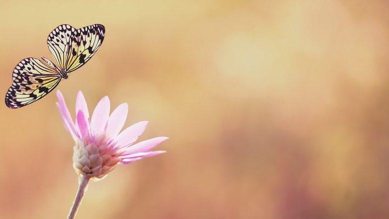 butterfly-min